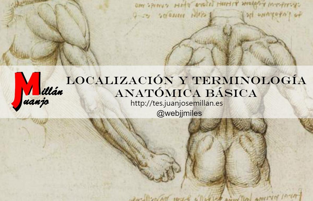Localización y terminología anatómica básica - Blog de Transporte ...