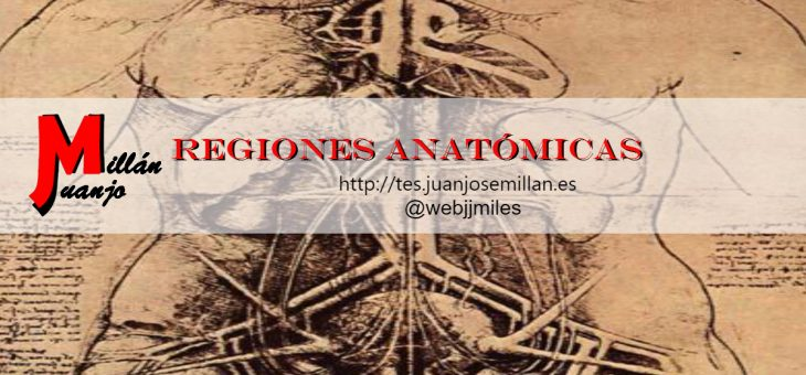 Regiones anatómicas
