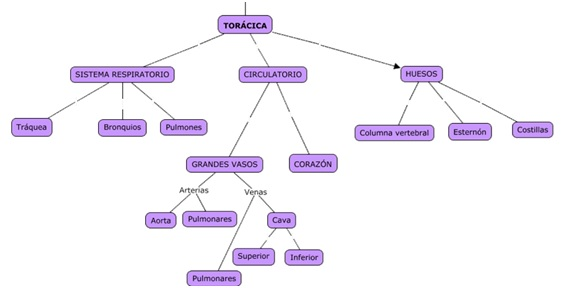 Regiones anatómicas - Blog de transporte sanitario - Juan José Millán